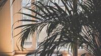 tanaman hias batang